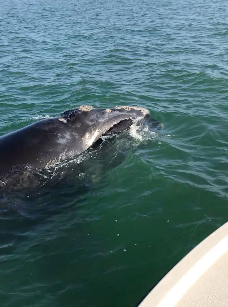 One of world's most endangered whales spotted in Gulf of Mexico