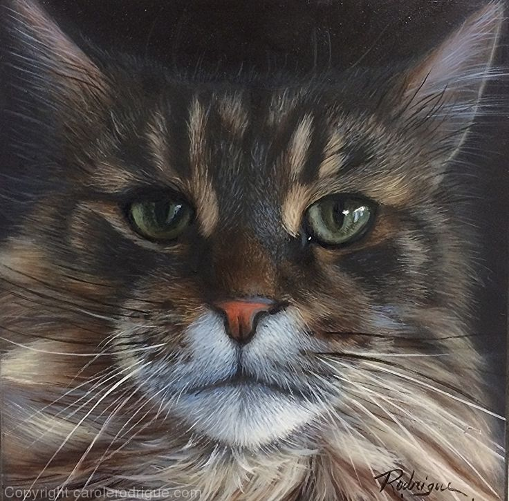 Simba, Maine Coon by pet portrait artist Carole Rodrigue Oil ~ 6 x 6   #catpaintings #cats #catart #petportraits #petportraitartists #petportraitsCanada #realisticcatpaintings #catlovers  #felineart