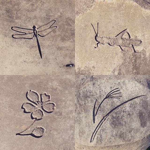 【kashokai】さんのInstagramをピンしています。 《先程投稿させていただいた『風の展望台』モニュメントの近くにある腰掛け用?の石には、ささやかに彫り物が。 控えめなサイズはぜひ現地で感じてほしいです😊  #彫刻#石彫#石#風の展望台#町田#小山田#トンボ#バッタ#桜#ススキ#ぬくもりの園#嘉祥会#福祉#介護#stone#sculpture#stonecarving#dragonfly#locust#sakura#silvergrass#machida#tokyo#nukumorinosono#welfare》