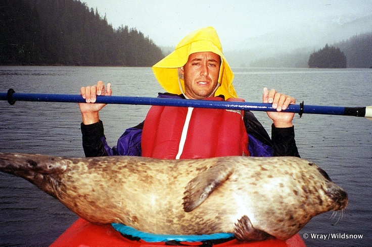 Paddling with a Seal — Thoughts on Backcountry Photography