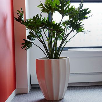 PRODUCT LINE RECTANGLE PLANTERS VIEW ALL PRODUCTS SQUARE PLANTERS VIEW ALL PRODUCTS ROUND PLANTERS VIEW ALL PRODUCTS RESORT PLANTERS VIEW ALL PRODUCTS TABLE TOP PLANTERS VIEW ALL PRODUCTS OUTDOOR FIBERGLASS PLANTERS VIEW ALL PRODUCTS INDOOR FIBERGLASS PLANTERS VIEW ALL PRODUCTS COMMERCIAL FIBERGLASS PLANTERS VIEW ALL PRODUCTS TAPERED FIBERGLASS PLANTERS VIEW ALL PRODUCTS OVAL FIBERGLASS PLANTERS …
