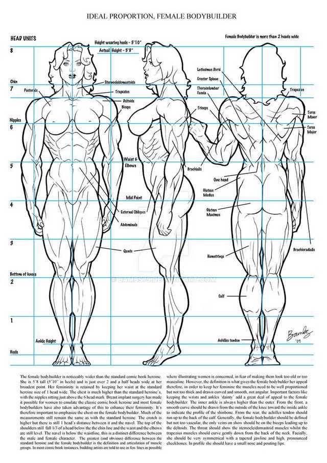 Drawing/Anatomy dump part 4  Live free or dump hard
