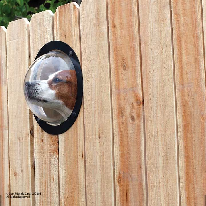 The Cottage Market: Take Five: Cool Dog Stuff. A window in the fence so he can see what's going on out there.