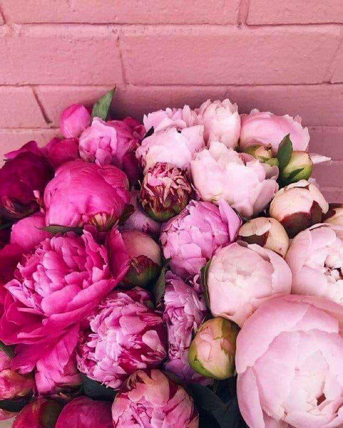 La Vie N'est Que Le Reflet Des Couleurs Qu'on Lui Donne : n'est, reflet, couleurs, qu'on, donne, Reflet, Couleurs, Donne, #flowers, #instagram, #instadaily, #pivoines, Re…, Pretty, Flowers,, Peonies,, Flower, Garden