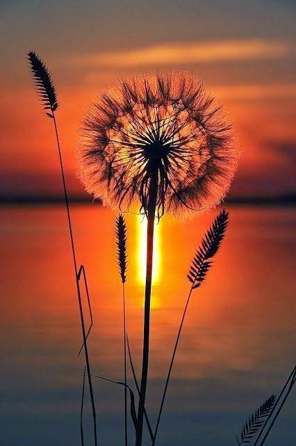 Sunset Flowers.