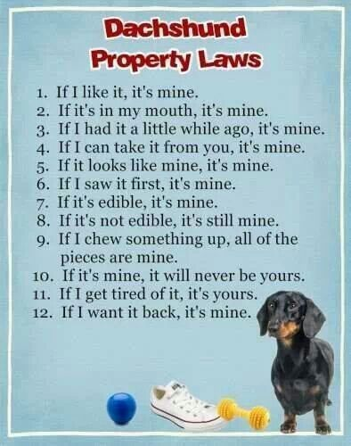 Know The Rules I Love My Dachshund ♡ Pinterest Toys