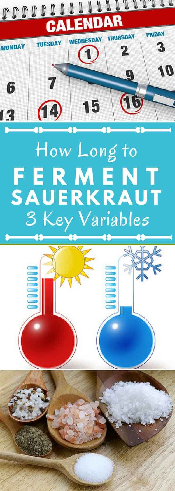 Fermenting sauerkraut? Want to know how long to ferment it? http://www.makesauerkraut.com/how-long-to-ferment-sauerkraut/