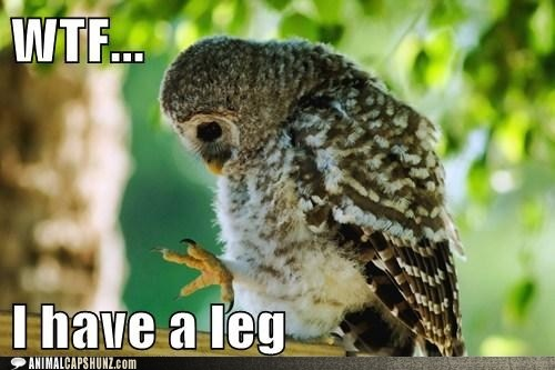 WTF: Owl Baby, Cute Animal, Laughing, Funny Pictures, Baby Owl, Cute Cat, Funny Stuff, Birds, Who Knew