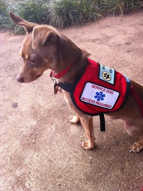 Can You Get A Service Dog For Panic Attacks