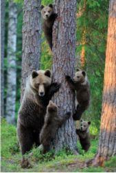 Kiipeilevä karhuperhe | Perromania - Yleensäkin karhut
