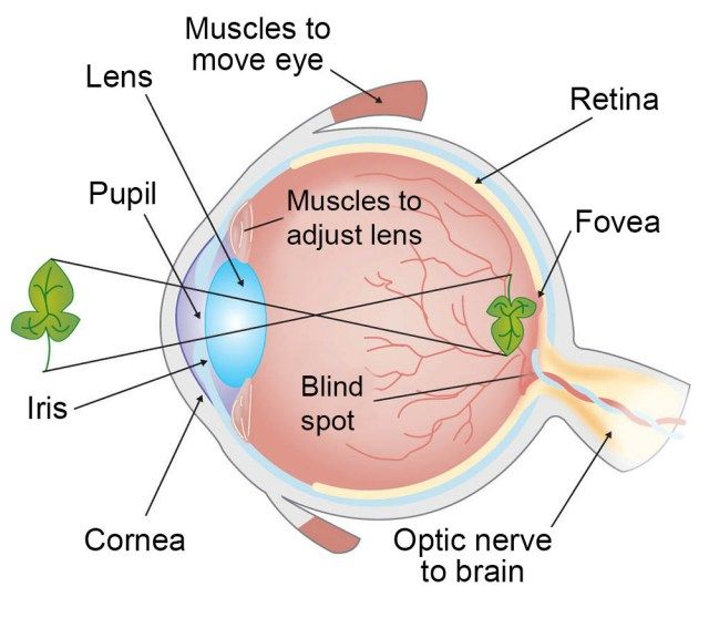 Eye Diagram Light - Wiring Diagram ONE Data