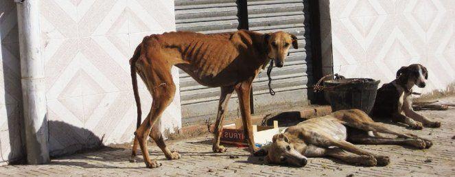"""So behandelt man Hunde in Spanien, die nicht mehr """"gut genug"""" für die Jagd sind"""