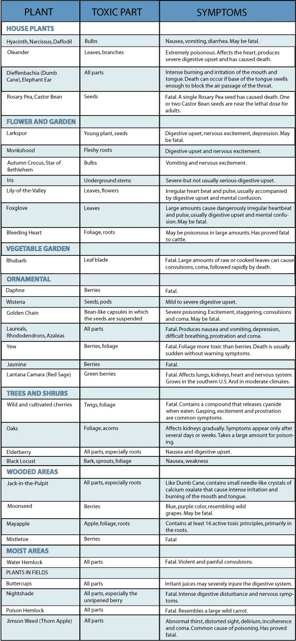 List Of Foods Toxic To Dogs And Cats