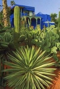 Majorelle Gardens wall mural - Morocco Marrakech  http://www.travelraters.com
