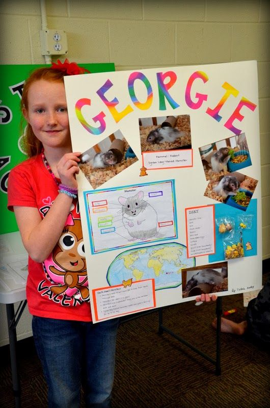 Horse science fair projects