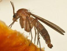 Как избавиться от комаров без ядовитой «химии»: 9 крутейших способов!