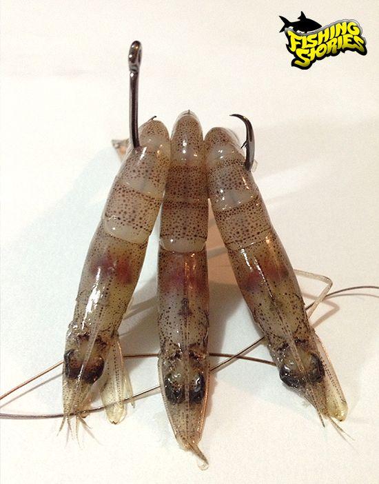 Montagem de chicote para pesca de corvina.                                                                                                                                                                                 Mais