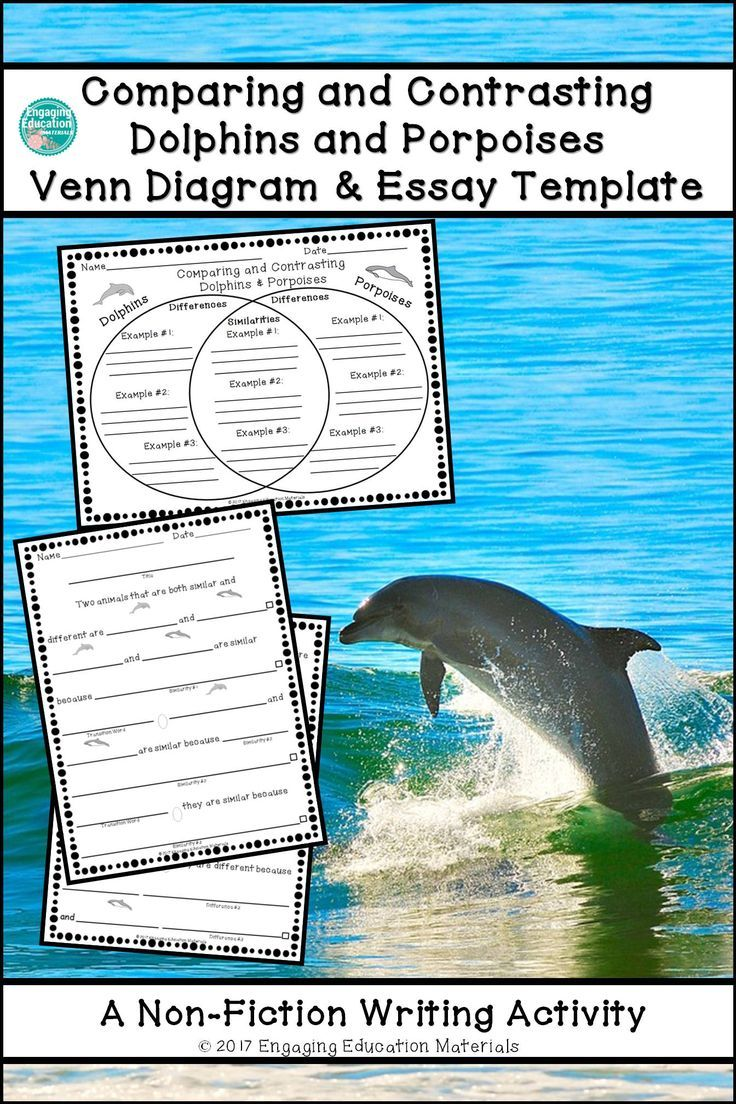 compare and contrast shark and dolphins essay Whales and dolphins essay mostly whales and dolphins compare so many things often with lines and patches of different hue and contrast.