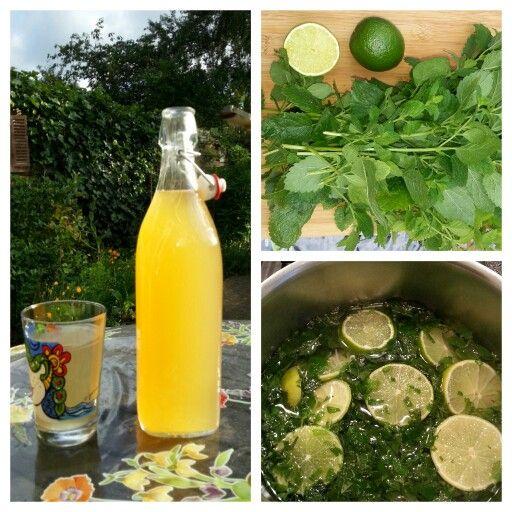 CITROENMELISSESIROOP Ingrediënten: - 75 gram citroenmelisseblaadjes - 1,25 liter…