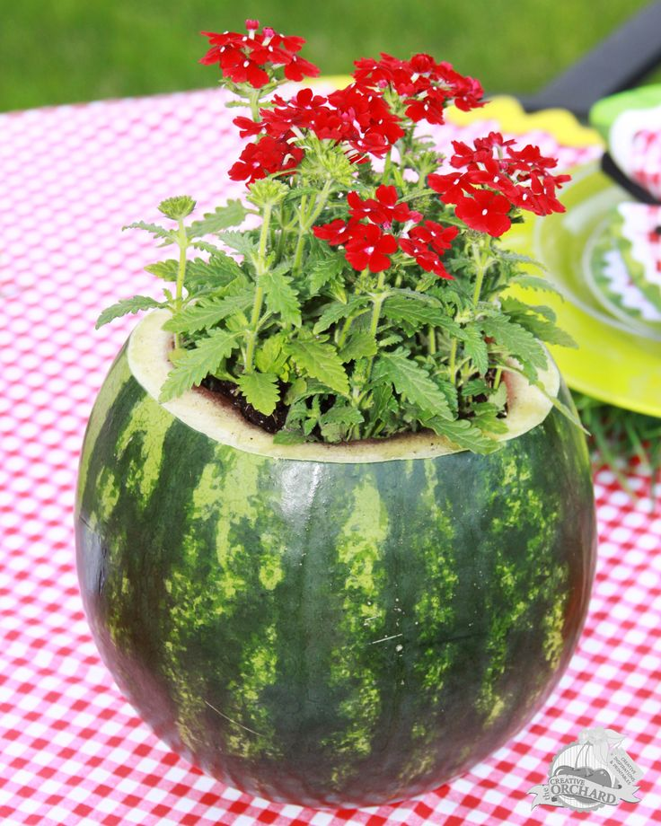 Watermelon Flower Pot. Isn't this pretty? This would work for your cookouts, parties, picnics or any gathering you're having!