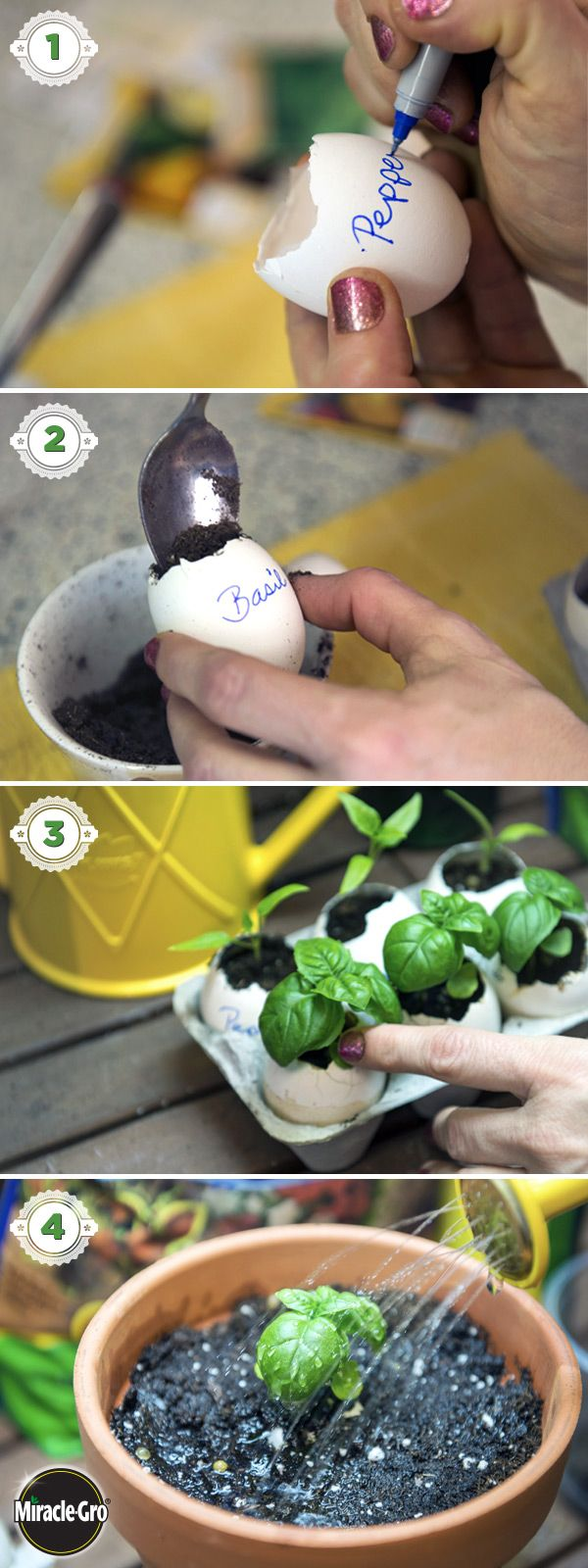 Learn how to grow your own seeds indoors using eggshells in this simple, DIY…