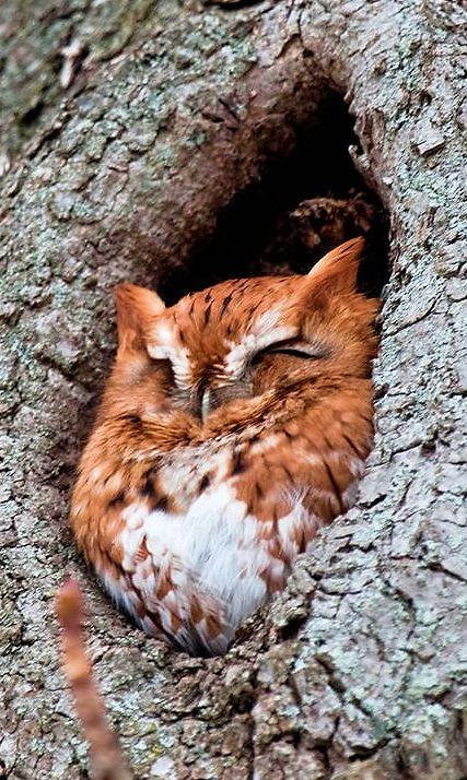 Cute little owl                                                                                                                                                      More