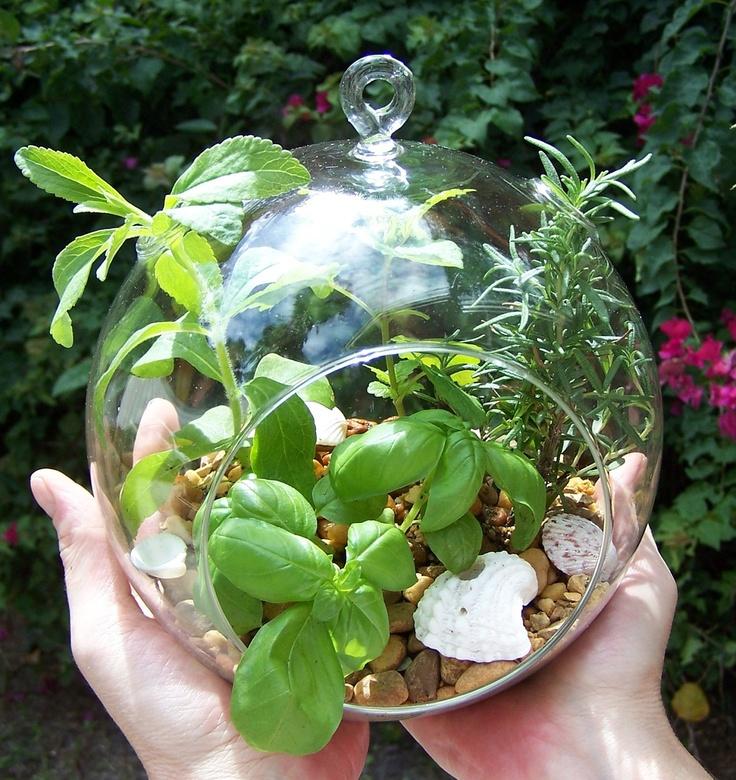 Herb Garden Terrarium Kit Hanging Glass ORB Plants DIY Project.