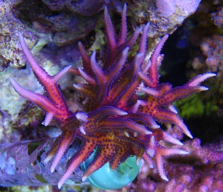 Best 14 aquarium memes images on pinterest aquariums for Pink saltwater fish