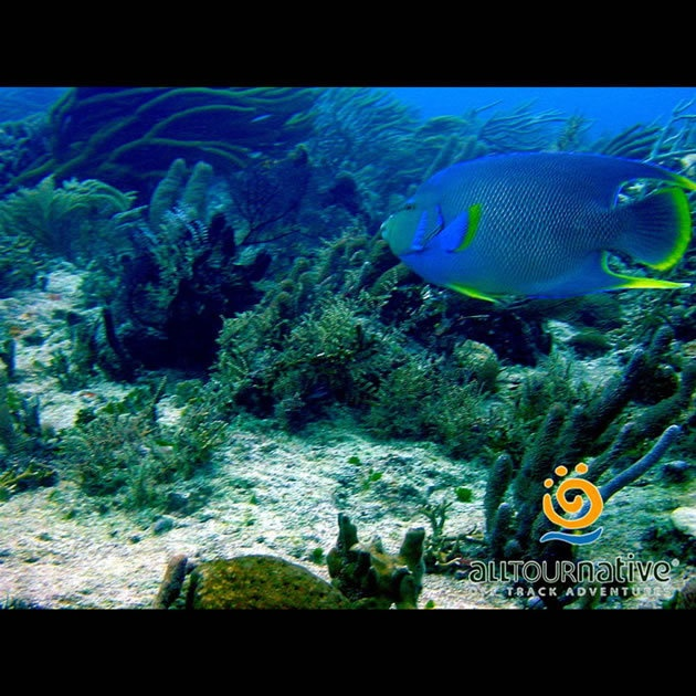 Once you fix your glasses and plastic tube for snorkeling, water will leave you soft and clear and explore the waves, colorful reef universe Caribbean Sea.