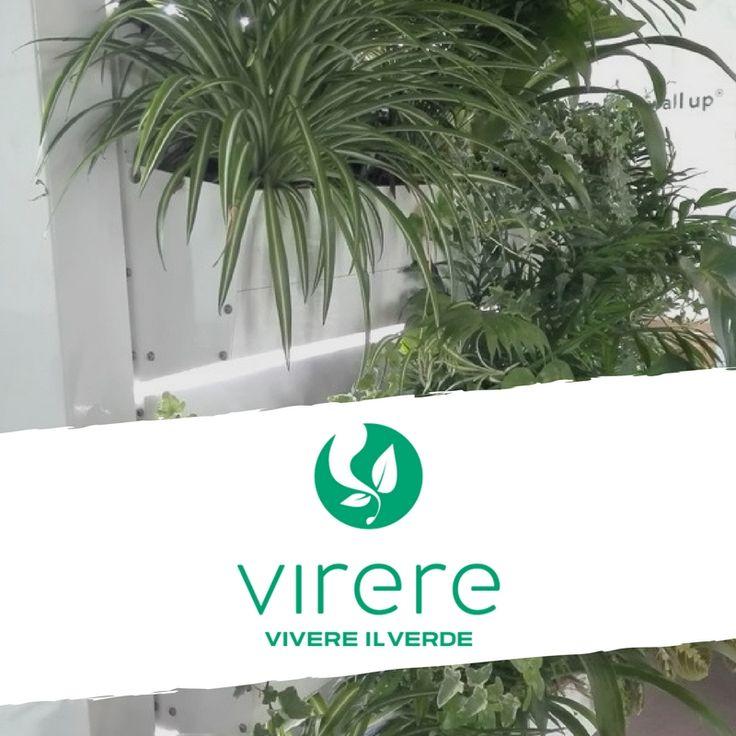 Dona un aspetto unico alle pareti di casa e del tuo ufficio. Le pareti verticali verdi con piante vere, sono dei veri e propri giardini verticali. Realizzate con piante vere e con un sistema d'irrigazione automatizzato e nascosto alla vista,rappresentano un ottima soluzione per sfruttare al meglio spazi che si hanno a disposizione,sia in casa che sui balconi e nei giardini. Un modo originale per inserire un po' di verde all'interno della casa e per rivisitare gli spazi esterni creando zone…