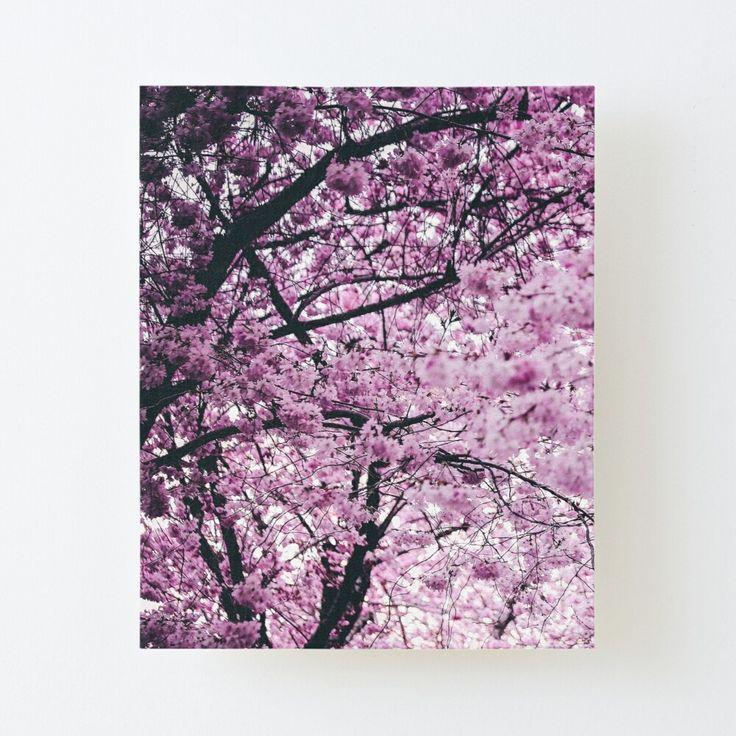 Sakura Cherry Blossom Tree Canvas Mounted Print By Amarkii In 2020 Cherry Blossom Tree Blossom Trees Tree Canvas