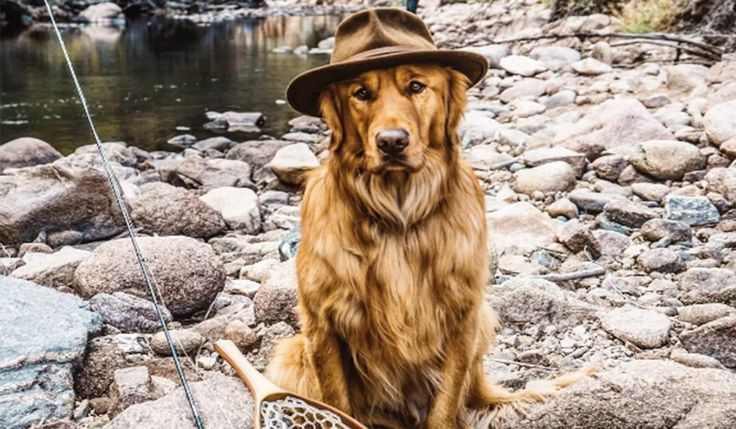 DOGS WHO TRAVEL ON INSTAGRAM