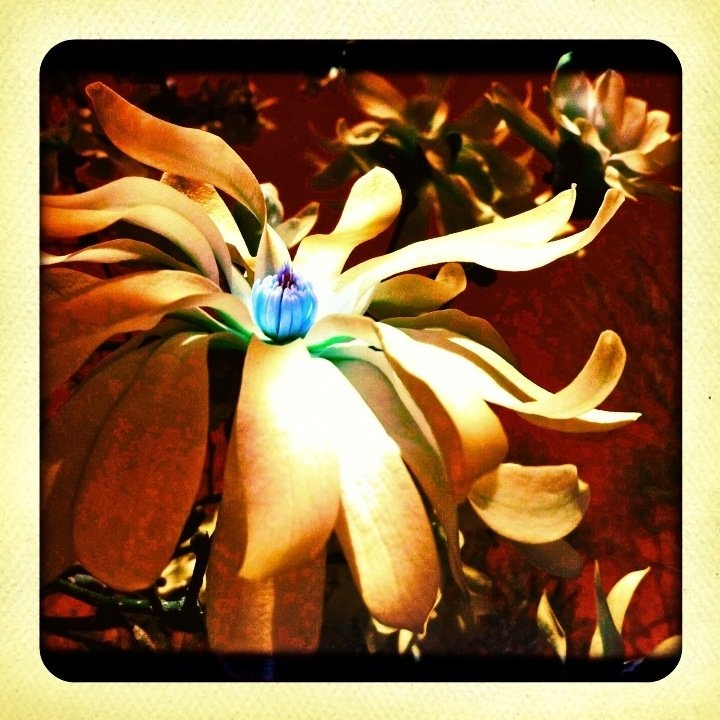 Backyard flower...