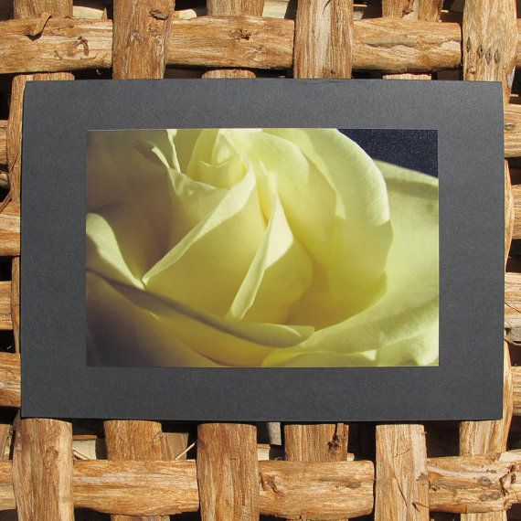 Photo greeting card. Rose 2. Large greeting card with by Saraphir