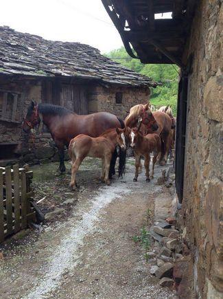 ASTURIAS, ALLER, Villar de Piñeres. Casa rural El Cobijo de Villar. Antigua casa asturiana siglo XVIII restaurada para hacer sentir una estancia única. Dispone de un dormitorio, cocina, baño y salón con sofá cama. Situado en un pueblo rural de montaña, típico asturiano, a 800 m. a nivel del mar y con vistas de valles y montañas que hacen posible sentir el contacto con la naturaleza. A unos 27 Km. de la estación de esquí de #FuentesDeInvierno y a 48 Km. de #ValgrandePajares #Asturias