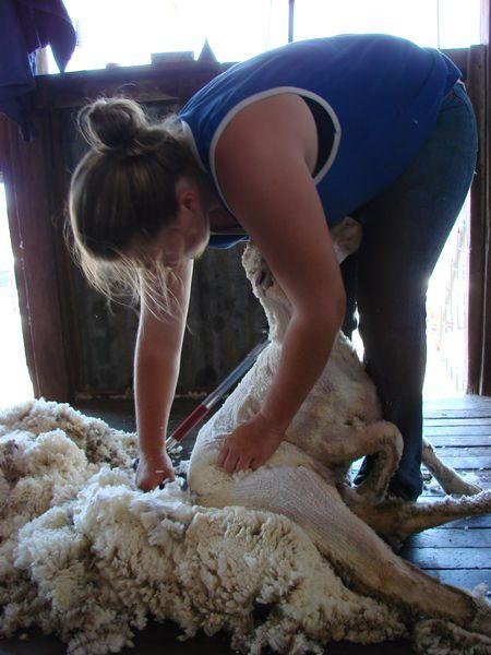 aussie female shearer