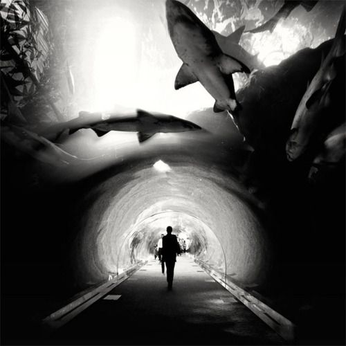 Dubai Aquarium :: Underwater Tunnel -- wanna go here!Sharks Weeks, Sharks Tanks, Dubai, Black And White, Aquariums, Black White, Sea, Places, Photography