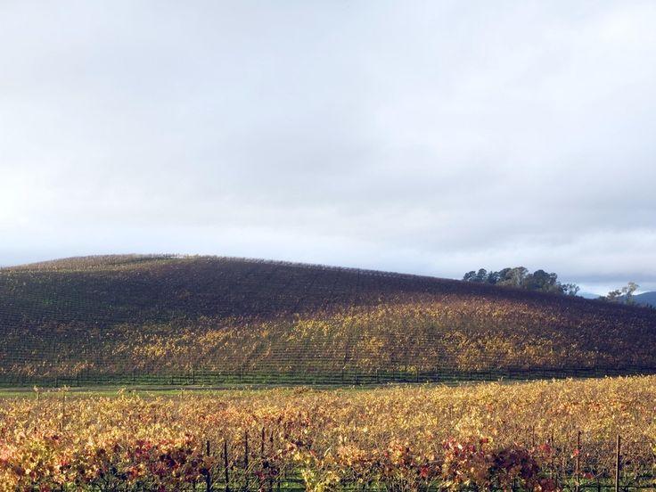 "Sonoma County, California - Novemeber 2006 Recreation Of ""bliss"" Or The Windows Xp Desktop Background [3200x2400] (goldin Senneby)"