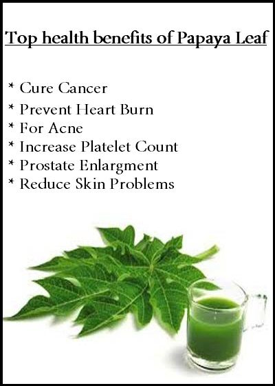 Here's How Papaya Leaf Can Fight And Kill The Cancer