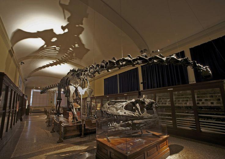 Diplodocus skeleton lighting at Museo Cappellini, Bologna by Beatrice Ferrieri | #ledlab #lightingdesign #museum #led #lightingdesigners #lighting #CreativeGallery #bologna | www.ledlab.it