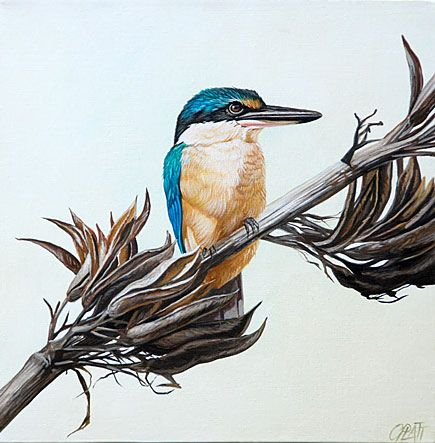 craig platt nz bird and wildlife artist