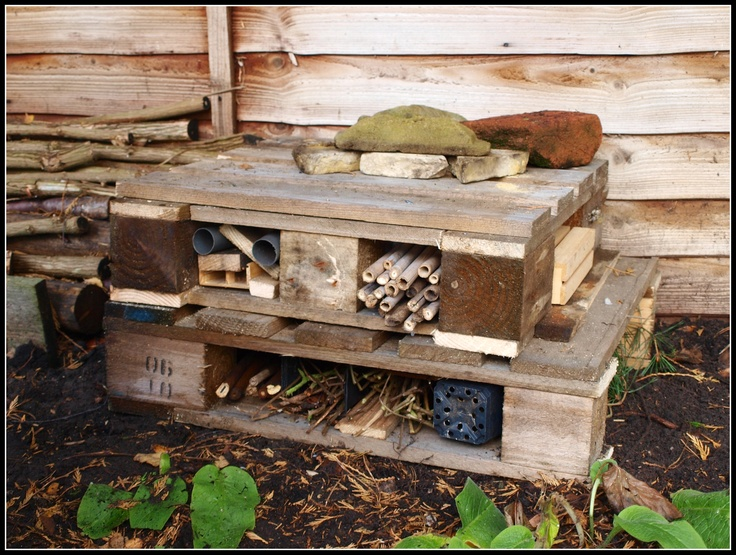 My new insect hotel - made from an old wooden pallet - beautiful!!!!