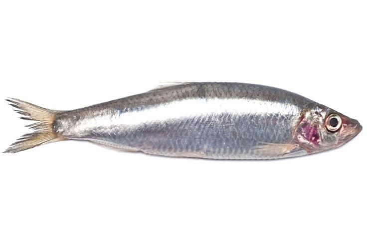 Brisling, Sprattus sprattus. Sildefisk. Fanges i store mengder langs Europas vestkyst fra Norge til Portugal. Anvendes som sardin eller ansjos avhengig av størrelse; særlig interessant etter hermetikkindustrien tok av. Fanget først med landnot, senere snurpenot. En fjord åpnes ikke for hermetikkfiske dersom fisken ikke oppfyller kvalitetskrav til størrelse og fettinnhold etter prøvefisk. Rieber & Søn-konsernet kjøper brislingen og selger den som King Oscar sardiner - 5,50-6,90 kr per kg.