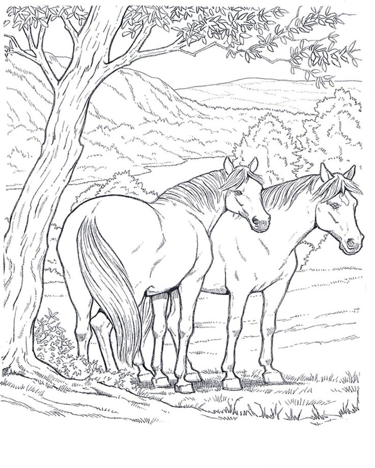 cavallo_4 disegni da colorare per adulti