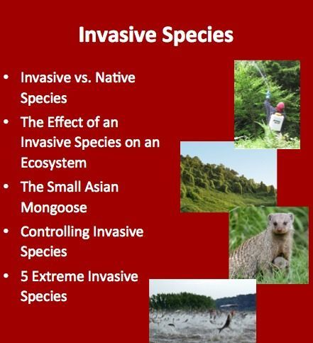 invasive species assignment Assignment with research on invasive species introduction to new populations  rubric for evaluation password protected site for ontario teachers only.