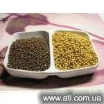 Семена горчицы белой Талисман 1репродукция продам, фото, где купить Николаев