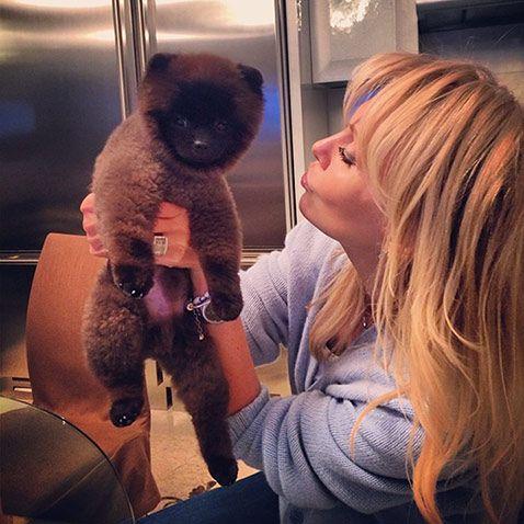 В семье певицы Валерии пополнение  http://www.woman.ru/home/animal/article/99373/#fr=sn