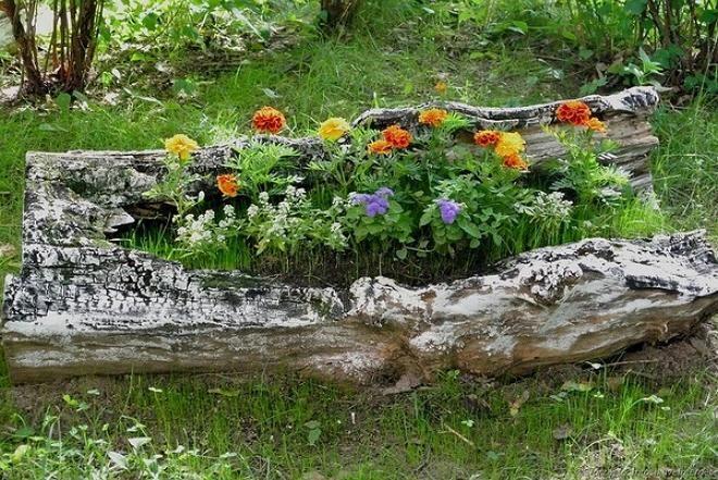 Цветы в бревне