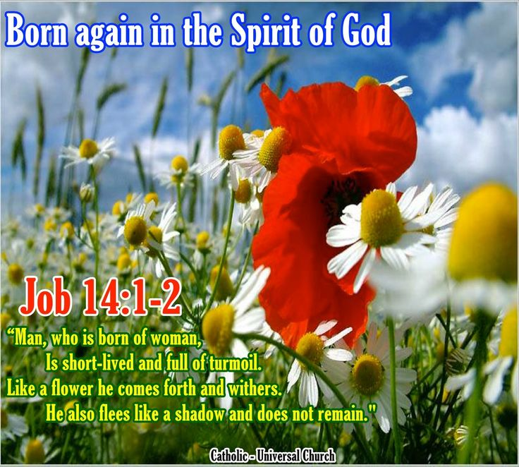 Bible verse romans 834 our daily blossom bible verses bible verse romans 834 our daily blossom bible verses pinterest verses bible and roman m4hsunfo Choice Image