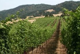 Types of Dry White Wine